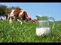 Chov skotu, produkce mléka a pěstování pícnin