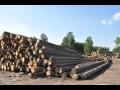 Zpracování stavebního řeziva krovy, jehličnaté a listnaté stromy