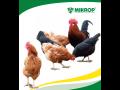 Prodej krmné směsi pro všechny druhy drůbeže, slepice, krůty, kuřata, ...