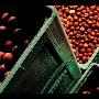 Odolný velkoobjemový plastový kontejner na ovoce - prodej