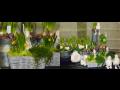 Květinářství, prodej květin, květinové aranžmá Opava