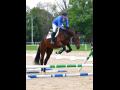 Koně na prodej Nebanice – sportovní, hobby, chovní