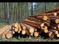 Výkup dřeva, kulatiny, kmenů, palivového dřeva, vysoké výkupní ceny