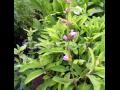 Bylinky a léčivky – více než 100 druhů nabízí bylinková zahrádka Zahradnictví Petro