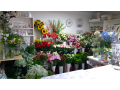 Zahradní centrum Želechovice - Květinka
