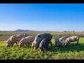 Rostlinná a živočišná výroba, chov a velkovýrobna vepřů, jatka