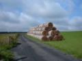 Zpracování biomasy Praha
