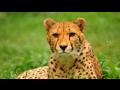 Zoologická zahrada Olomouc s atraktivními expozicemi a komentovaným krmením zvířat