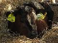 Živočišná výroba, farma Rýmařov, Jan Hořák