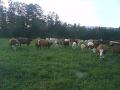 Chov skotu, prodej hovězího masa a drobů z vlastní farmy
