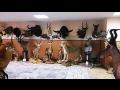 Preparování loveckých trofejí, věrné preparáty jako živé
