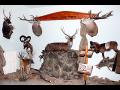 Preparace Pekař spol. s r.o., výroba loveckých trofejí s doživotní zárukou
