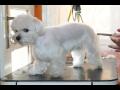 Stříhání psů, koček na veterině  - úprava srsti, drápků zvířat