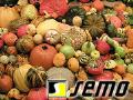 Prodej osiv zeleniny, léčivých a aromatických rostlin Prostějov