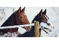 Střední a VOŠ zemědělská škola v Opavě s jezdeckým oddílem, školními koňmi, statek