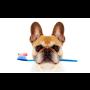 Zubní ordinace pro psy, kočky a drobné savce – komplexní péče o chrup ...