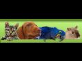 Prodej, e-shop krmivo pro psy, kočky, ptáky, hlodavce Ostrava