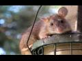Deratizace hlodavců, dezinsekce hmyzu, dezinfekce, Tachov