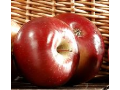 Prodej ovocných stromku a ovoce – jablka, hrušky, švestky a meruňky