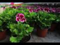 Balkónové a záhonové květiny, zeleninová sadba i pytlový substrát