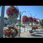 Květinový mobiliář pro města a obce – květináče, truhlíky, mísy