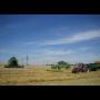 Konzumní i krmné brambory, pšenice – sezónní prodej českých obilovin a okopanin