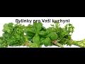 JASFRESH s.r.o., Šumperk, velkoobchod ovoce a zeleniny, bylinek, citrusy, jabka, bazalka