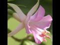 Fuchsie eshop Zahradnictví Petro - více než 900 druhů včetně mrazuvzdorných