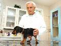 Povinné čipování psů Jablonec nad Nisou - nelze naočkovat proti ...