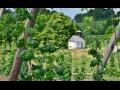 Zemědělská rostlinná výroba, pěstování chmele a obilí pro další zpracování