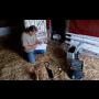 Alternativní medicína, biorezonanční přístroj Bicom a terapie pro všechny druhy zvířat