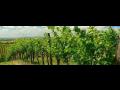 Vinařství, vinárna Znojmo