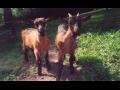 Farma Tereza Langová, biopotraviny z kozího mléka, ubytování