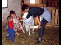 Farma Tereza Langová, chov koz, výroba a prodej kozích produktů