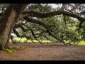 Péče o památné stromy - odborné ošetření památných stromů