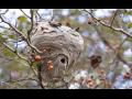 Odstranění a likvidace nejen vosích hnízd formou desinsekce