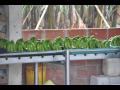 ECUADOR; Bananen