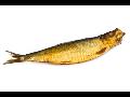 Rybí saláty, mořské ryby, rybí pomazánky
