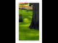 Sadové, zahradní úpravy, prodej dřevin Opava