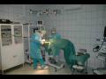 Veterinář, veterina, veterinární nemocnice, ošetření koní Opava