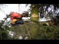 Těžba dřeva, péče o les, zahradu i ovocný sad, rizikové kácení stromů, Český Ráj a Podkrkonoší