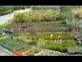 Ovocná a okrasná školka Příbor, dřeviny a květiny na zahradu