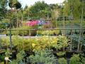 Ovocná a okrasná školka Příbor, okrasné rostliny, pěstování a prodej
