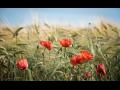 Rostlinná výroba, semenářství, pěstování semen máku, hořčice, kmínu, sóji a jetele