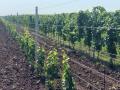 Výroba opěrné drátěné konstrukce do vinohradu, sadu - vinohradnické dráty, sloupky, kotvy