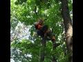 Praha odstraňování náletu stromů a keřů