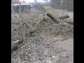 Praha odstra�ov�n� n�letu strom� a ke��