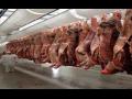 Porážka jatečných zvířat, odborné bourání a nakládání hovězího i vepřového masa, rozvoz