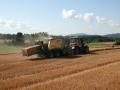 Rostlinná a živočišná výroba, výroba mléka, pěstování obilovin