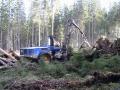 Těžba a přeprava dřeva, předmýtní a mýtní těžba, Šumava